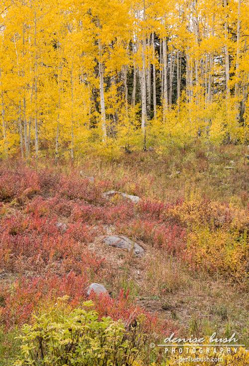 'Autumn Palette' © Denise Bush