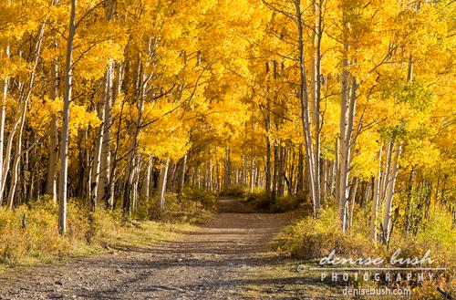 'Autumn Path' © Denise Bush