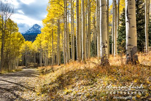 'Mountain Highlights' © Denise Bush