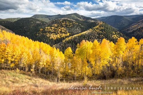 'Roaring Fork View' © Denise Bush