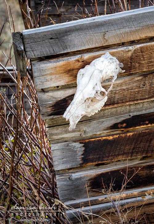 'Cowboy Cabin Adornment © Denise Bush