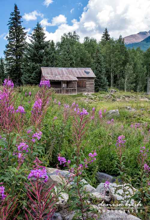 'Shack With Fireweed' © Denise Bush