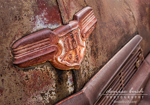 'Rusty All Over' © Denise Bush