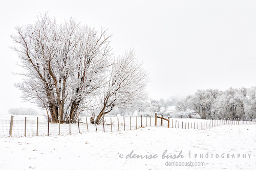 'Frosty Winter Scene' © Denise Bush