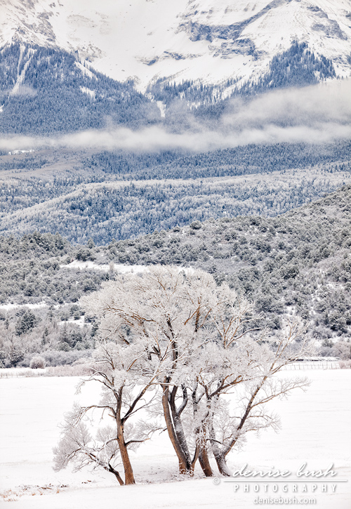 'Mountain Winter Scene' © Denise Bush