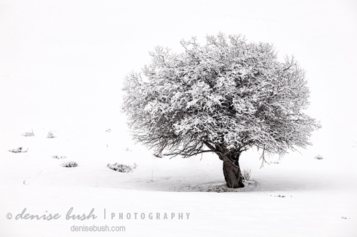'Tree On Snowy Slope' © Denise Bush