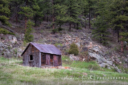 A roadside cabin looks quaint dressed in rust and weathered wood, against a pine forest backdrop.