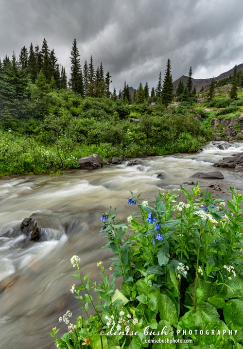 Some bluebells sit peacefully under cloudy skies beside a fast-moving mountain stream.