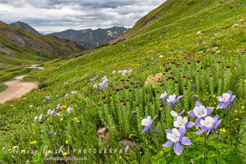 A high mountain road leads to a beautiful display of wildflowers.