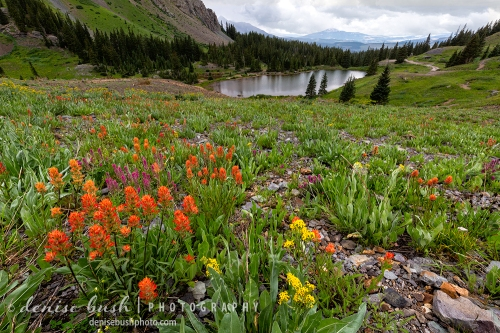 Indian Paintbrush graces a gentle slope leading to a mountain lake, high in the mountains of Colorado
