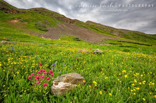 Some pink paintbrush blooms on the side of a mountain basin near Silverton, Colorado