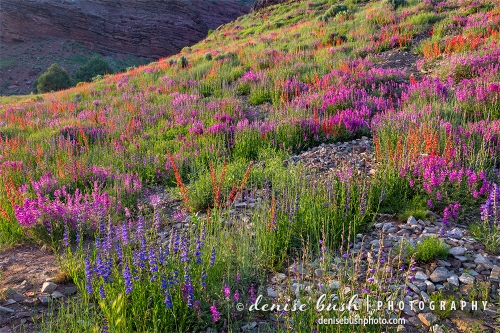 Wildflowers are abundant along the highway near Telluride, Colorado.