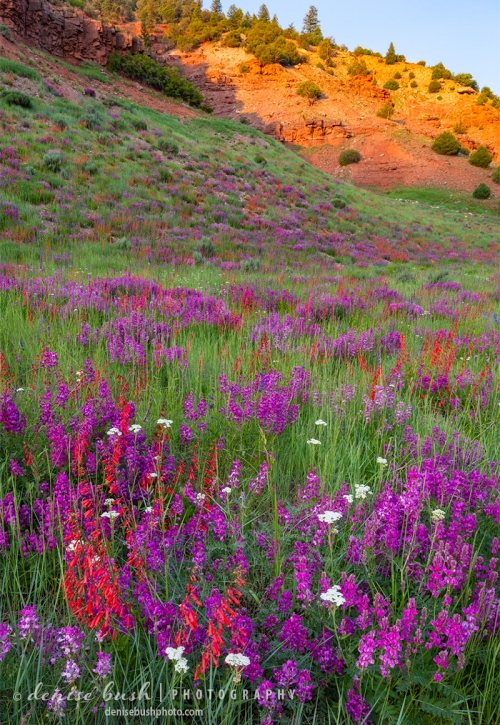 A wildflower hill poses beside an glowing orange ridge at the end of a beautiful day!