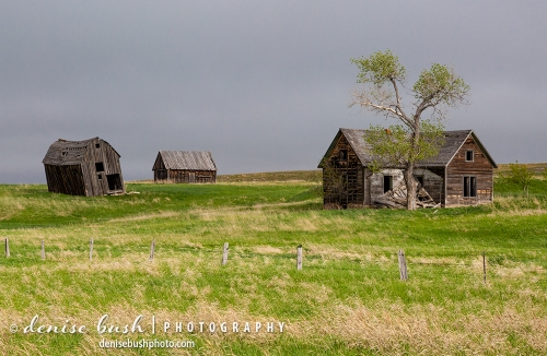 An old homestead and a couple of barns have seen better days while making a nostalgic scene today.