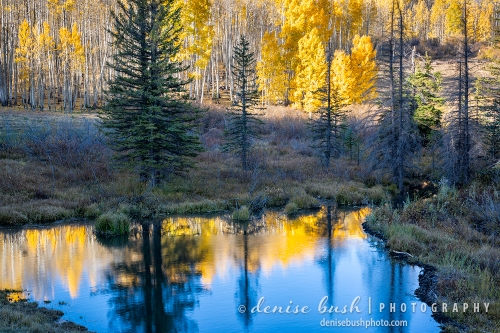 Fall reflects its bright colors in a small pond in the mountains.