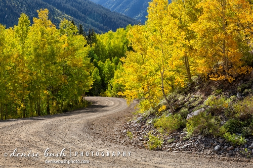 The beginning of autumn along a mountain road displays gold with the promise of more to come.
