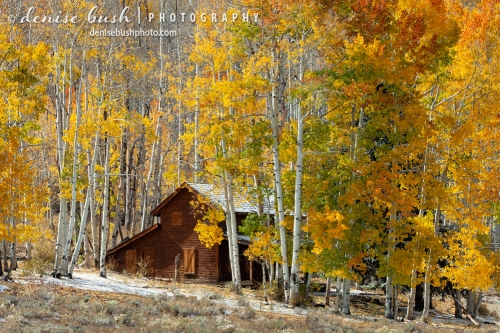 An old homestead near the Dallas Divide and the borders between Ouray and San Miguel Counties, Colorado display both winter and fall.