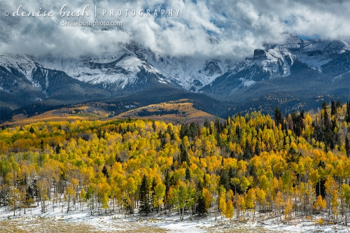 A beautiful aspen display glows below fresh snow and lifting clouds.