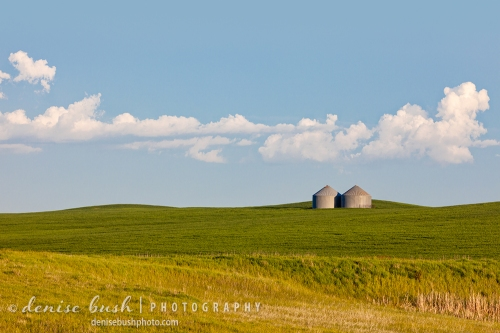 Distant grain bins and a gentle green landscape combine for a pleasing rural scene.