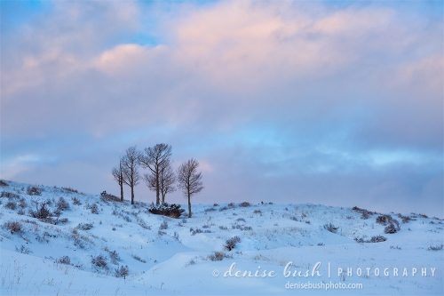 Five bare trees look lovely in the soft winter light at day's end.