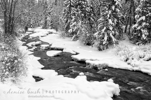A stream flows happily along, among a beautiful snow-covered forest.