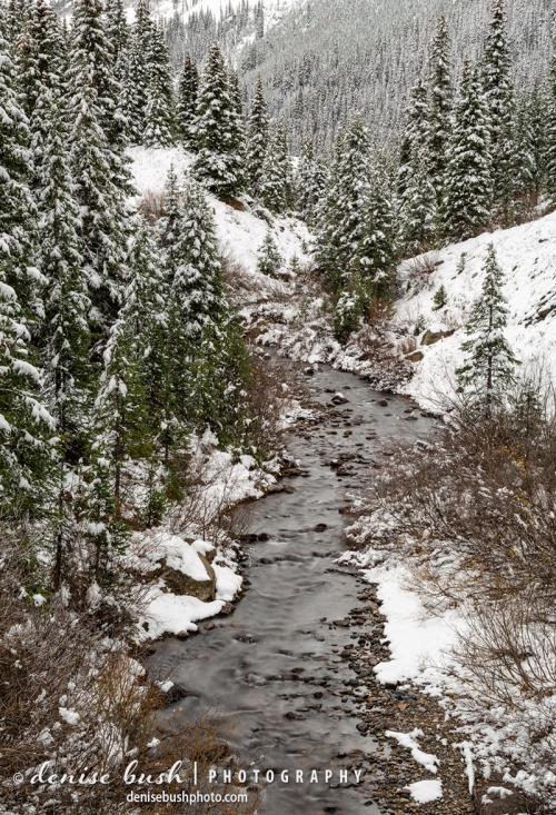 A mountain stream flows along, surrounded by a snow-coated evergreen forest.