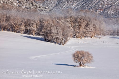A little tree is all alone in the valley after a snow storm.