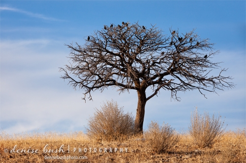 Birds take a short rest in a little gambel oak on a sunny winter day.