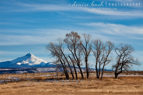 A grouping of cottonwood trees stands in the foreground with Lone Cone Mountain in the background.