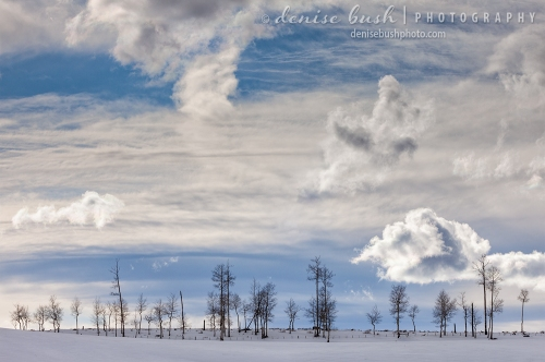 A row of trees growing on a distant rise creates an orderly winter composition.