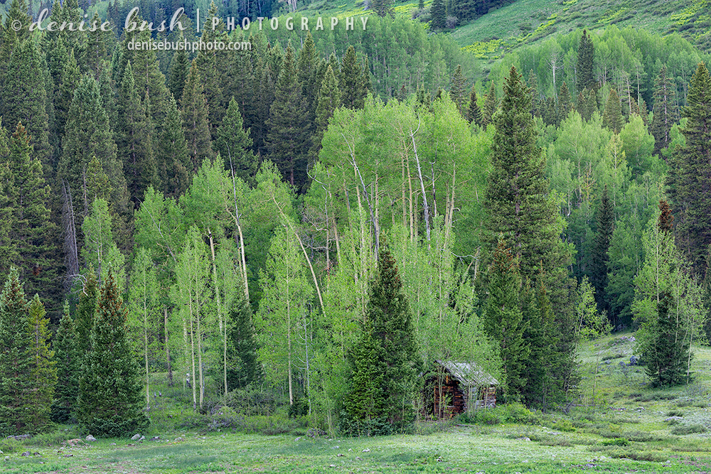 A little cabin looks as if it is in hiding, among the aspens and evergreens.