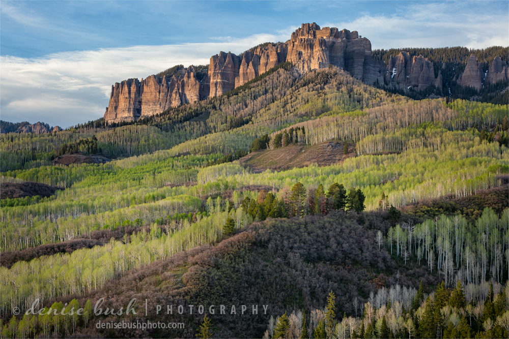 Bright green aspens are just one of the many beautiful sights of spring in the San Juan Mountains of Colorado.