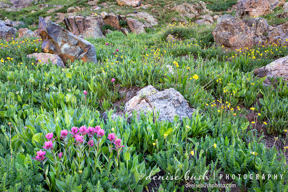 Wildflowers often grow on rocky slopes which can put the photographer on unsteady ground.