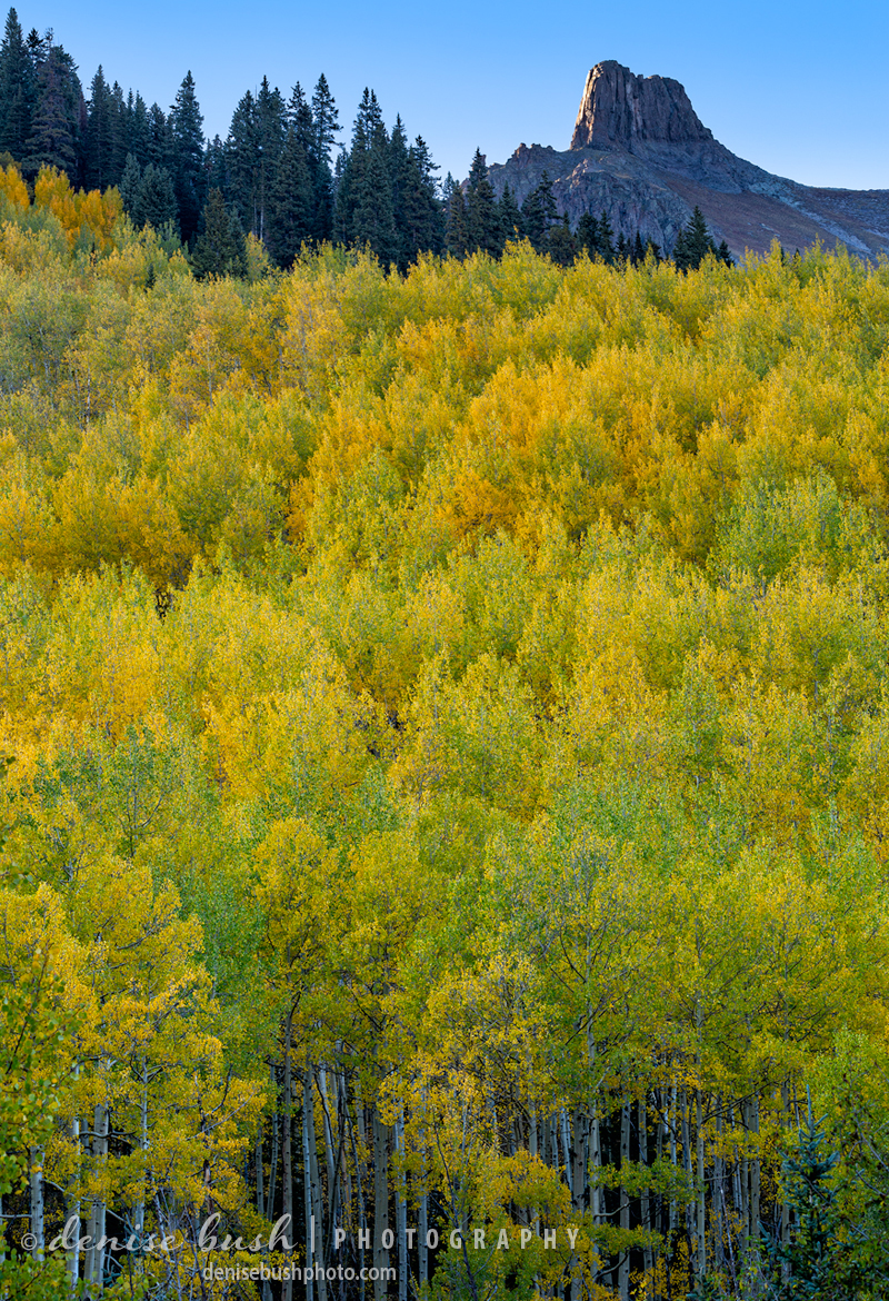 A forest of aspens fill the slope with autumn gold below a knobby peak.