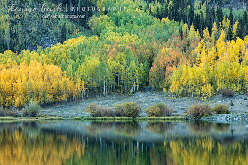 Aspens display autumn colors beautifully, across Crystal Lake in Ouray County, Colorado.