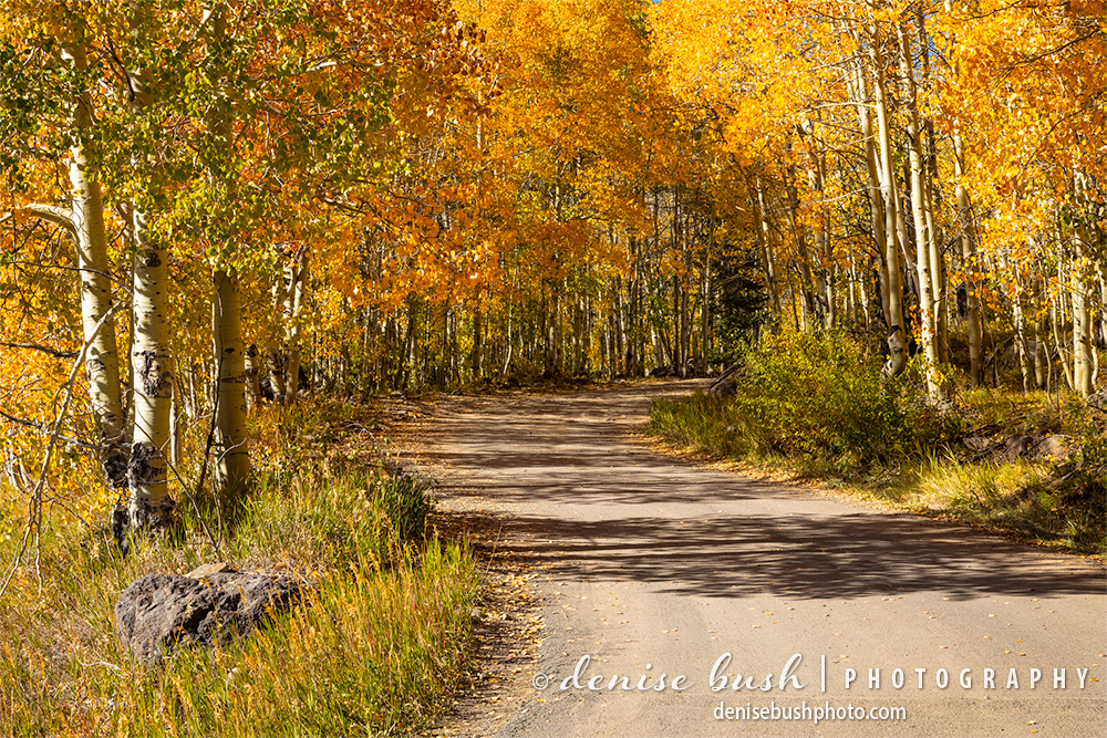 An autumn road invites a investigation to look at the beautiful, colorful foliage.