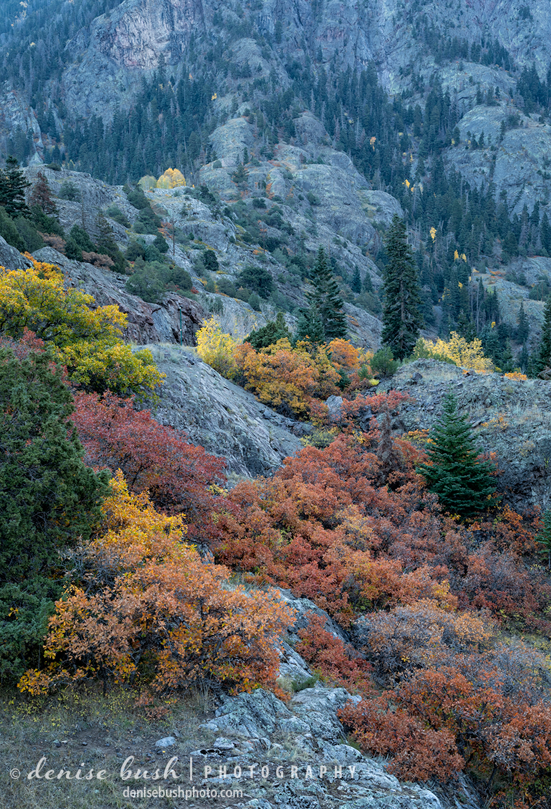 Autumn oak brush makes a colorful statement in the mountains of Colorado.