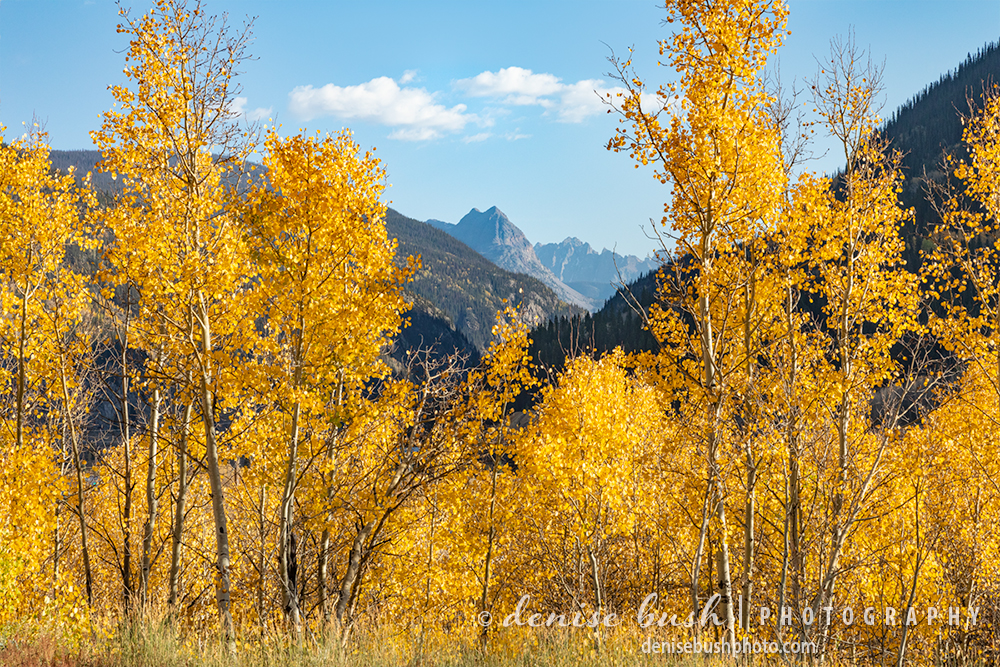 An opening in the autumn aspens reveals the Grenadier Mountains in the San Juans of Colorado.