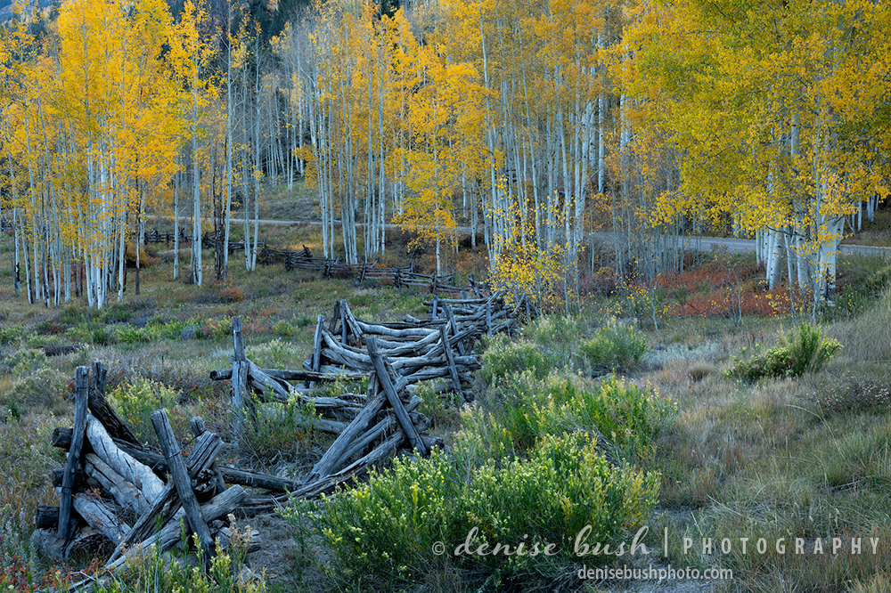 An old-fashioned fence adds interest to this beautiful autumn scene along a country road.