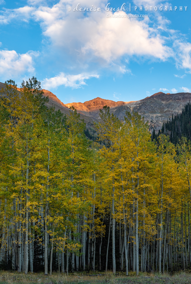 The last bit of light illuminates a ridge above autumn aspen trees.