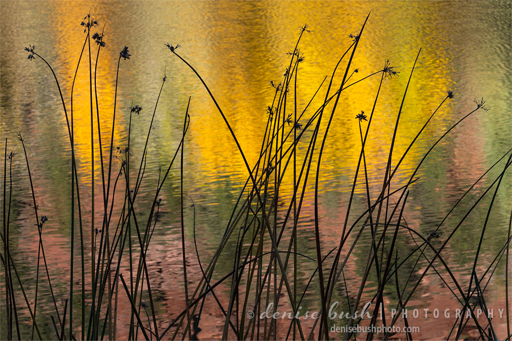 Some dry grasses strike a pleasing sihouette before an autumn pond reflection.