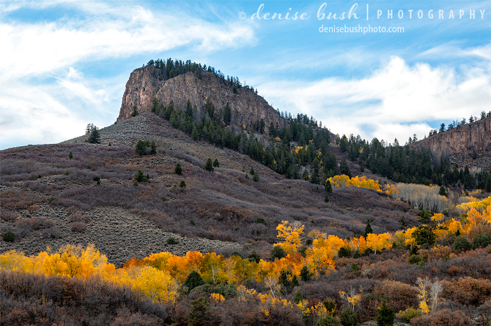 Colorful aspen trees circle around the base of and outcropping near Gunnison Gorge.
