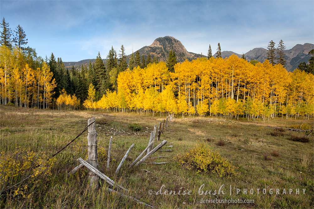 Brilliant aspens light up this scene near Durango, Colorado.