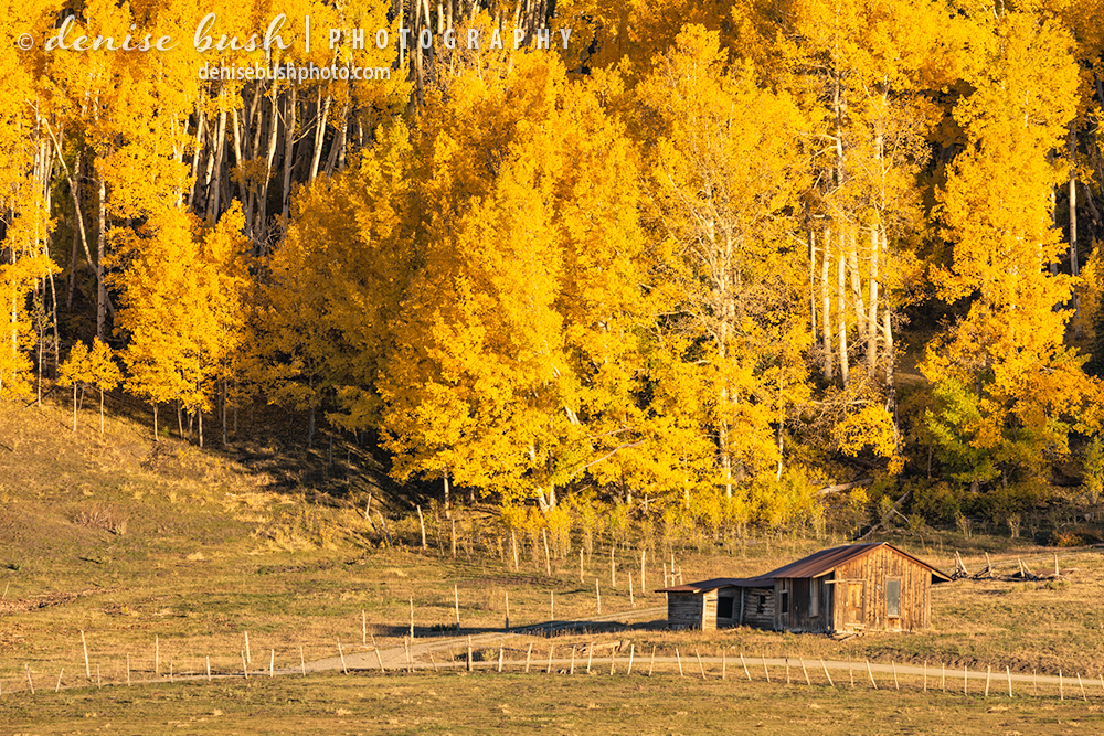 A weathered shack sits along a country road with a brillian autumn backdrop.