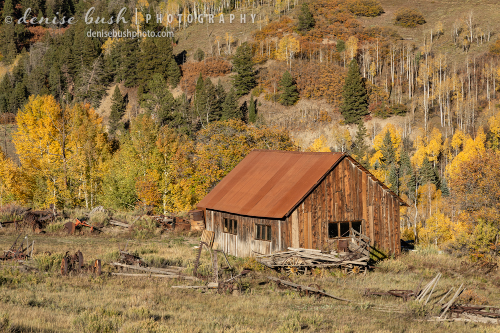 A shack with a rusty roof blends in with the surrounding autumn colors.