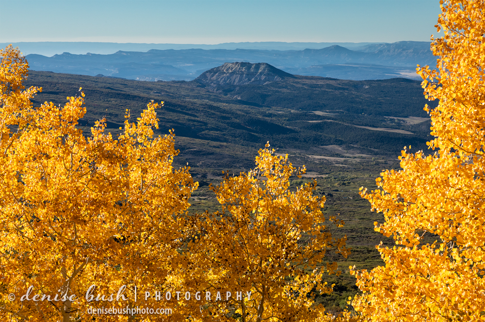 A view from on top of Grand Mesa shows a contrast between forest and high desert.