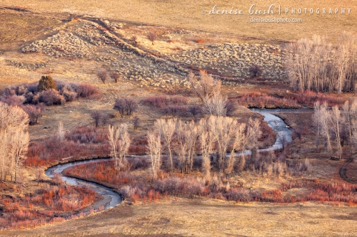 As seen from above on Loghill Mesa, Dallas Creek winds through Cottonwood Trees and Willows.
