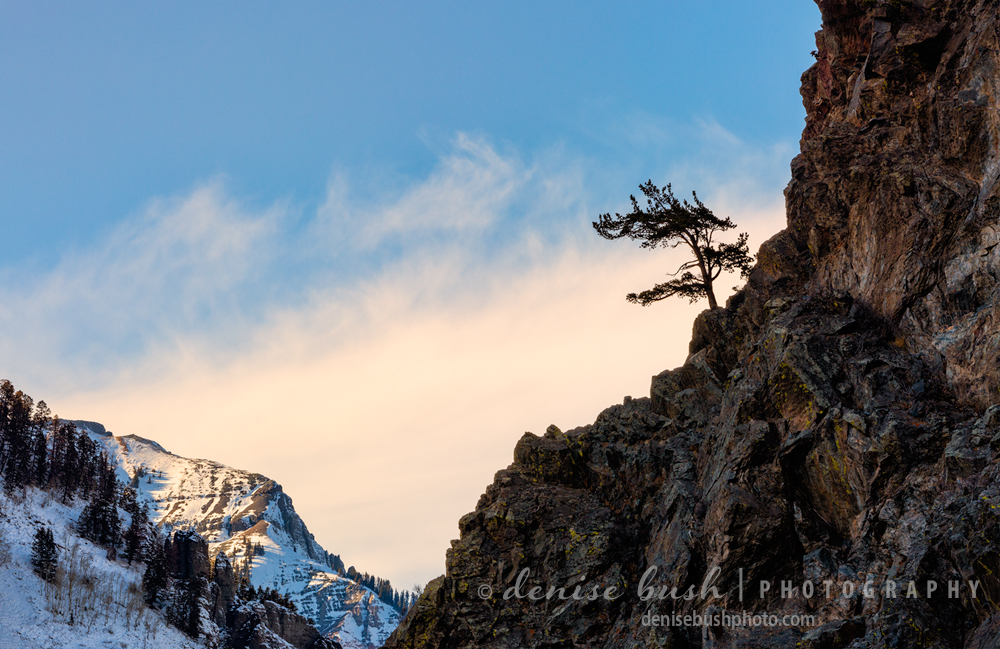 A small tree clings to the side of a cliff as it enjoys a mountain view.