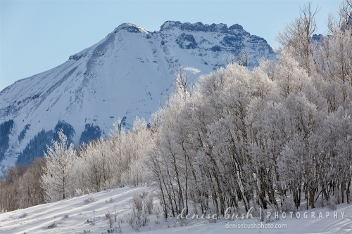 Trees below Corbett Peak, near Ridgway Colorado compete for attention with their early morning frosty coating.