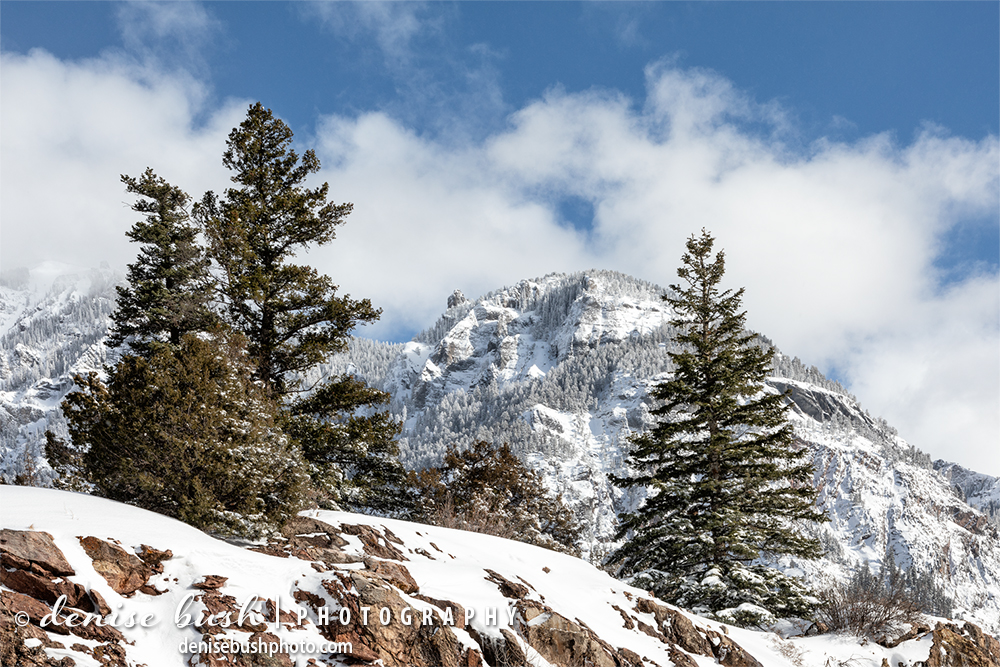 Three evergreens frame a mountain as a winter storm clears, in Ouray Colorado.
